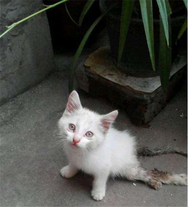 网友发现一只尾巴和后腿骨折的可怜幼猫,当她独自进家门,小猫露出的绝